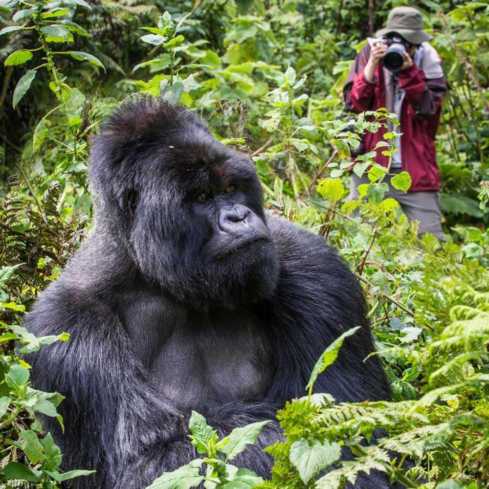 Expedición en busca de Gorilas