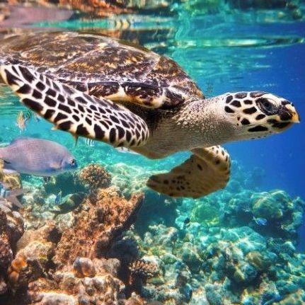Akumal Snorkel con Tortugas