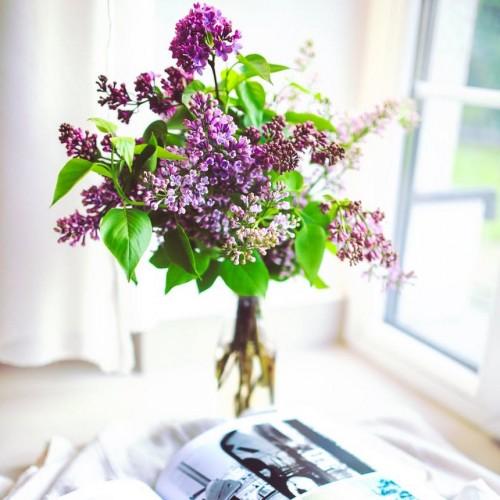 Flores para la casa
