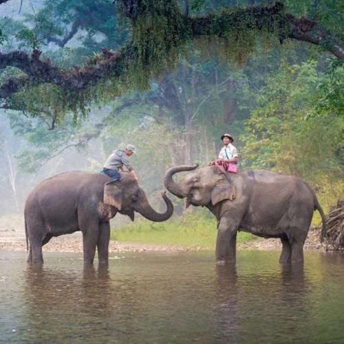 Aventura en elefante Chiang Mai para 2