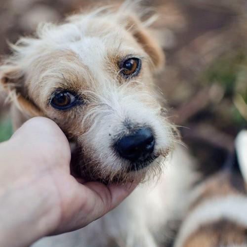 Fundación Gente por los Animales