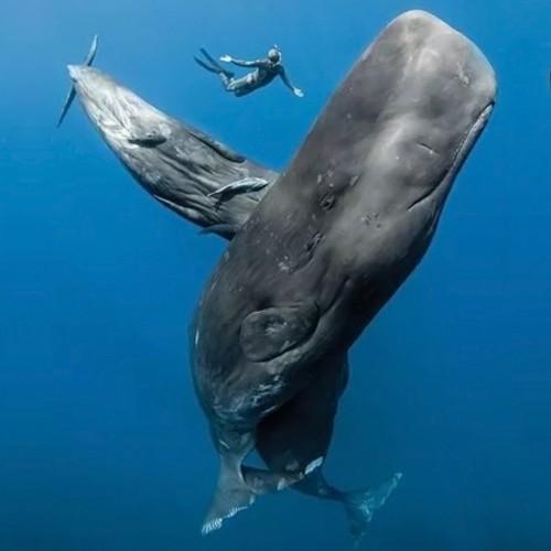 Nada con Ballenas, Tiburones y Otras Maravillosas Especies