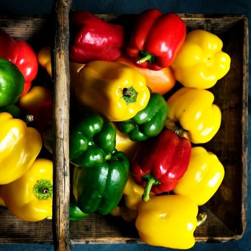 Cata y Cultivo de Superfoods