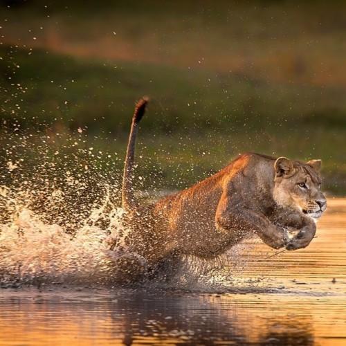 Remota Botswana