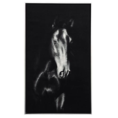 Black Horse Photograph